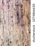 Small photo of Wood affected with woodworm Ips typographus. Damaged tree trunk close up. Destroyed bark tree rugged structure