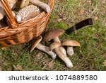 harvested at autumn amazing... | Shutterstock . vector #1074889580