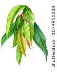 branch of green leaves... | Shutterstock . vector #1074951233