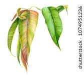 branch of green leaves... | Shutterstock . vector #1074951236