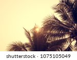 palm trees against sky  palm...   Shutterstock . vector #1075105049