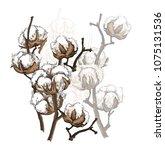 hand drawn cotton brunch in... | Shutterstock .eps vector #1075131536