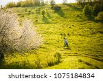 couple walk spring sunset... | Shutterstock . vector #1075184834