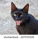 Stock photo angry black cat 107519234