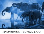 Wild elephants drinking water, detail of mammals in the jungle, nature