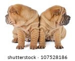 two shar pei puppies in studio... | Shutterstock . vector #107528186