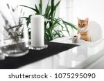 Stock photo the cat is sitting in front of the cake 1075295090