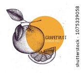 grapefruit vintage design... | Shutterstock .eps vector #1075339058