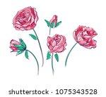 flowers vector illustration ... | Shutterstock .eps vector #1075343528
