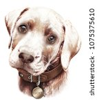 Stock photo portrait of a cute brown labrador puppy hand drawn complaining glance collar with medallion 1075375610