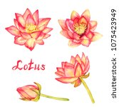 lotus flowers and buds...   Shutterstock . vector #1075423949