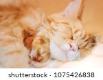 Stock photo red haired mother of a cat with a small kitten 1075426838