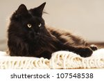 Stock photo black cat relaxing in a white blanket 107548538
