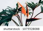 exotic tropical flower... | Shutterstock . vector #1075528088