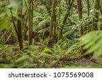 rainforest  ferns and rocks | Shutterstock . vector #1075569008