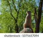 meerkats in the zoo | Shutterstock . vector #1075657094