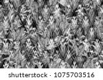back monochrome pattern floral... | Shutterstock . vector #1075703516