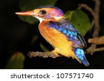A Malachite Kingfisher  Alcedo...