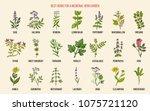 best herbs for a medicinal... | Shutterstock .eps vector #1075721120
