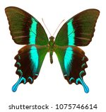peacock swallowtail  papilio... | Shutterstock . vector #1075746614