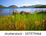 Lake Viewed Through Tall Grass...