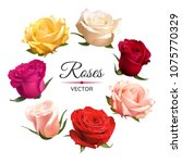 realistic color roses isolated... | Shutterstock .eps vector #1075770329