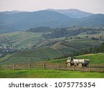 carpatian mountains summer... | Shutterstock . vector #1075775354