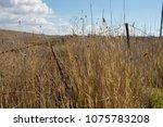 hay fields on side of road in... | Shutterstock . vector #1075783208