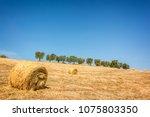 hay bale in a field  row of... | Shutterstock . vector #1075803350