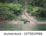usumacinta river mexico   19... | Shutterstock . vector #1075810988