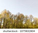trees of switzerland | Shutterstock . vector #1075832804