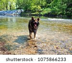 alsatian animal breeds dog... | Shutterstock . vector #1075866233
