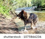 alsatian animal breeds dog... | Shutterstock . vector #1075866236
