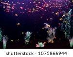 Small photo of Dark aquarium with lots of small fish. Ornatus in the dark aquarium. Ternary in the Aquarium