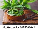 aloe vera on dark background  ... | Shutterstock . vector #1075881449