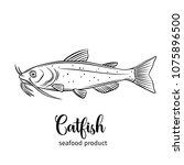 Vector Catfish. Hand Drawn Icon ...