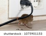closeup broken wire. the mouse... | Shutterstock . vector #1075901153
