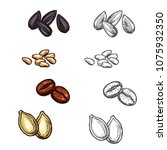 nuts  beans and seeds color... | Shutterstock .eps vector #1075932350