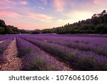 lavender field in summer ... | Shutterstock . vector #1076061056