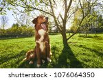 springtime on the garden. cute...   Shutterstock . vector #1076064350