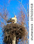 pair of storks sitting in nest. ... | Shutterstock . vector #1076101418