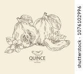 quince  fruit  flower  leaves... | Shutterstock .eps vector #1076102996