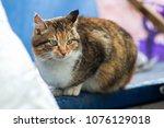portrait of a red rural cat | Shutterstock . vector #1076129018