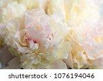 beautiful flowers  peonies....   Shutterstock . vector #1076194046