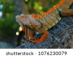 colorful lizard reptile | Shutterstock . vector #1076230079
