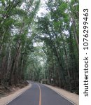 journey through the forest road | Shutterstock . vector #1076299463