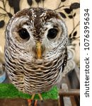 Small photo of cute owl pics