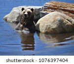 the grizzly bear also known as...   Shutterstock . vector #1076397404
