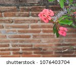 crown of thorns plants  pink... | Shutterstock . vector #1076403704