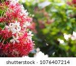 blur background selective soft... | Shutterstock . vector #1076407214